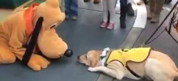 La emoción de un perro guía al conocer a Pluto en Disneylandia triunfa en Facebook