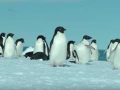 Hallan en la Antártida un fósil inédito de pingüino diminuto