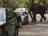 Un elefante desguaza todo a su paso