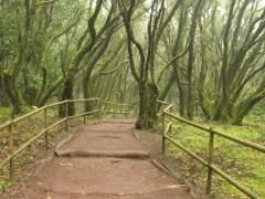 8 bosques de España que tienes que ver