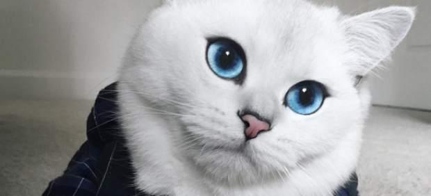 Coby, el 'gato más guapo del mundo', arrasa en Instagram con sus posados