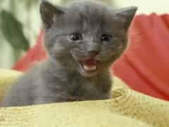 Un estudio aclara el origen de la domesticación de los gatos