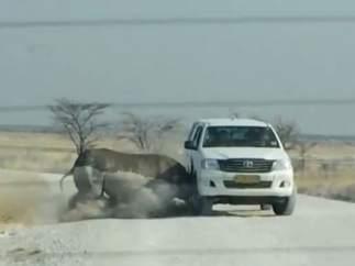 Imagen del momento en el que el rinoceronte embiste el vehículo