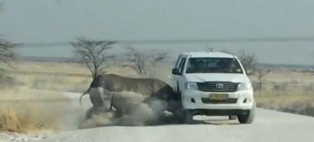 Imagen del instante en el rinoceronte embiste el vehículo