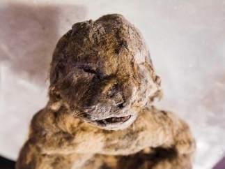 León de las cavernas