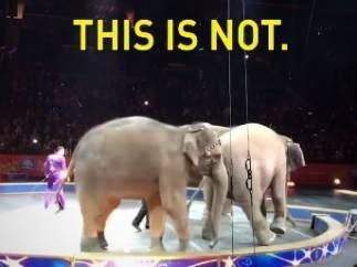 Elefantes en una función del circo Ringling