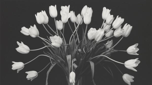 Tulips, 1988