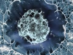 Célula madre humana