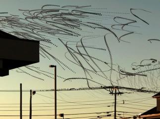 Dennis Hlynsky - Paths of Birds