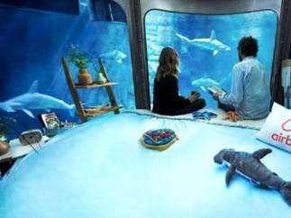 """""""Habitación"""" entre tiburones, en el Acuario de París"""