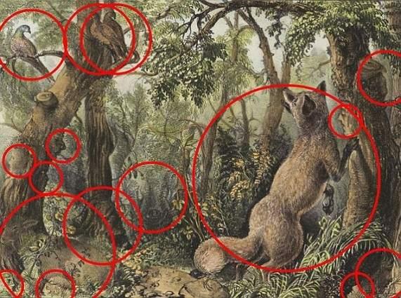 Hay 16 Caras De Animales Y Humanos Ocultas En Este Dibujo De 1872