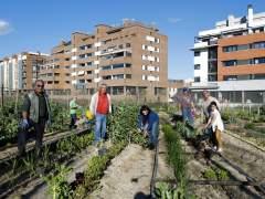 Oasis ecológicos en la ciudad: los huertos urbanos ganan terreno