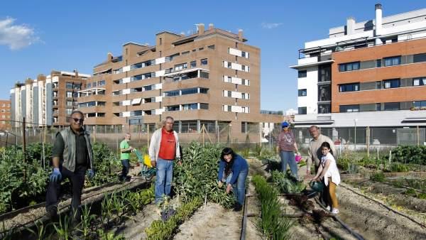 Huerto Montecarmelo, un año cosechando convivencia