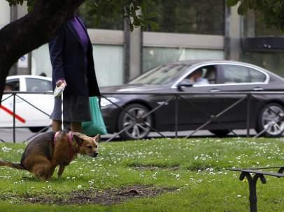 Perro haciendo caca en Madrid