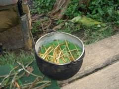 La droga de la selva: ¿qué es la ayahuasca?
