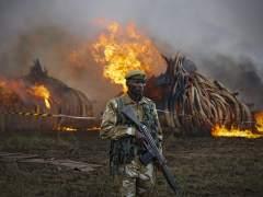 Kenia quema 105 toneladas de marfil