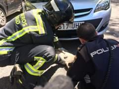 Un agente y un bombero tratan de reanimar a un perro atropellado durante media hora