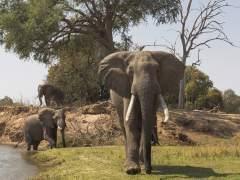 Zimbabue pone a la venta animales salvajes