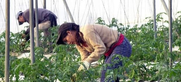 Mujeres trabajando en el campo