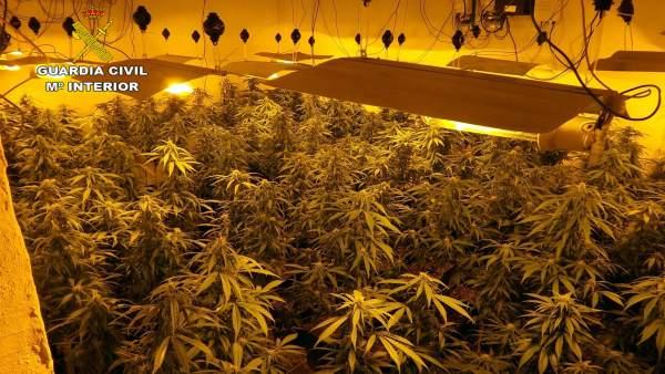 Invernadero clandestinos de marihuana