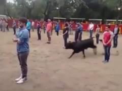 Un toro salta a una plaza llena de personas y... ¡No les ataca!