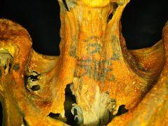 Los 30 tatuajes de una momia de 3.000 años