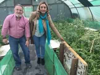 Visita de la Diputación de Almería a Caracoles 'El Perdiz'