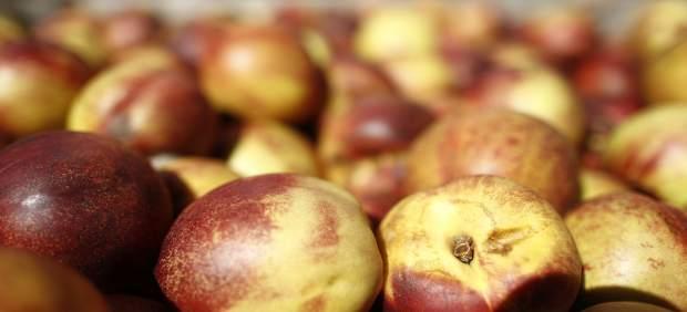 Convocado el Concurso 'Fruta Divertida'