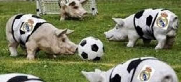 Stoitchkov se burla del Real Madrid con una imagen de cerdos en un campo de fútbol
