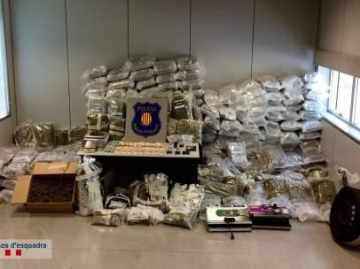 Marihuana encontrada por los Mossos en Sant Boi de Llobregat