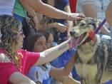 Uno de los perros en el desfile solidario