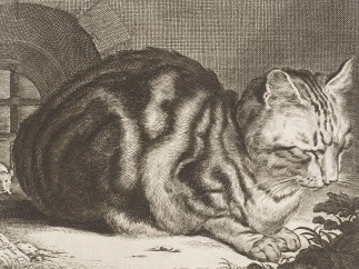 Cornelis de Visscher - The Cat, 1657