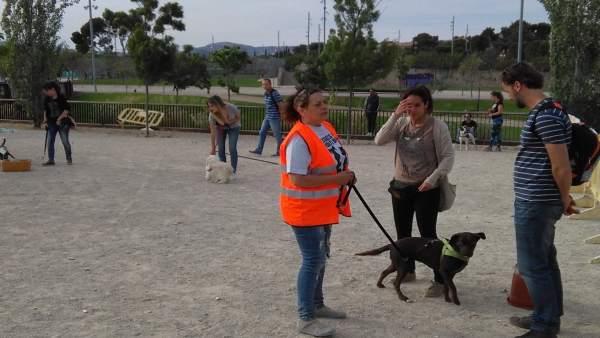 Escuela urbana de perros