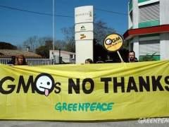 100 premios Nobel critican a Greenpeace por rechazar transgénicos