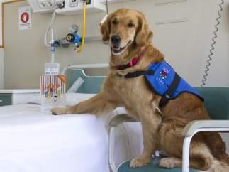 Terapias asistidas con perros en el Hospital