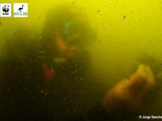 Mar Menor, contaminación, agua turbia