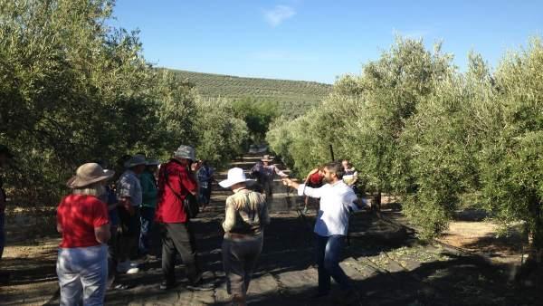 Turistas visitando un tajo de aceituna