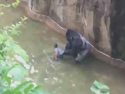Gorila y niño
