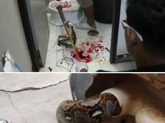 Una serpiente muerde el pene de un hombre en el váter