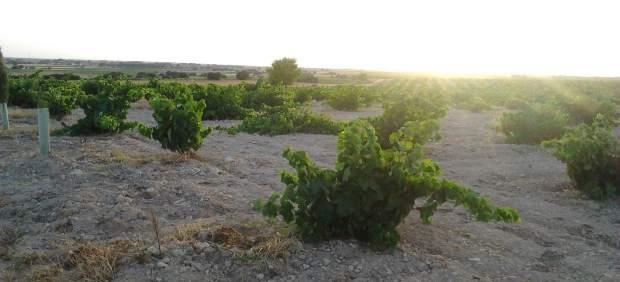 La agricultura orgánica no siempre es ecológica, según afirma un investigador francés
