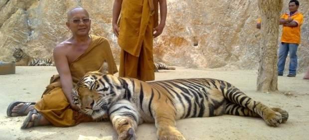 Descubren 40 crías de tigre muertas en un polémico templo de Tailandia