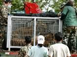 Nuevas pruebas de supuesto tráfico de animales en un templo de Tailandia