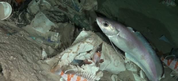 Basura en el fondo del mar