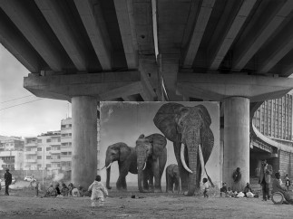 Nick Brandt - Underpass with Elephants (Lean Back, Your Life is on Track) 2015