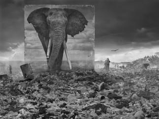 Nick Brandt - Wasteland with Elephant 2015