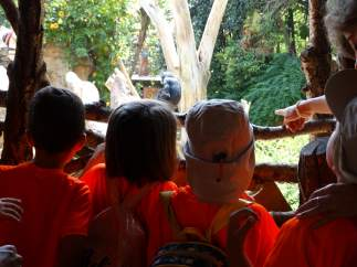 Nota De Prensa Jornada Escolar De Fotoprotección En Bioparc Fuengirola Campaña D