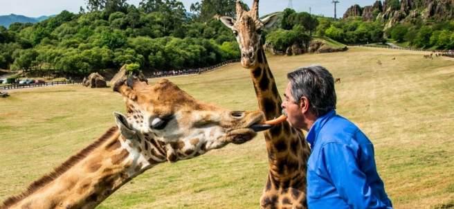 Miguel Ángel Revilla y una jirafa
