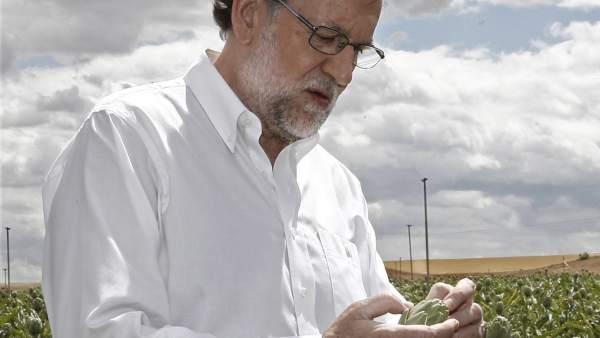 Rajoy en un campo de alcachofas