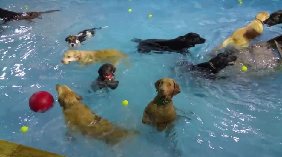 Un perro inm vil y que ignora a sus compa eros de juego ya for Piscina para perros barcelona