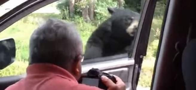 Susto del oso